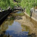 大谿川と柳