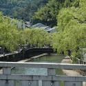 地蔵湯橋からの柳並木