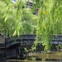 愛宕橋と柳